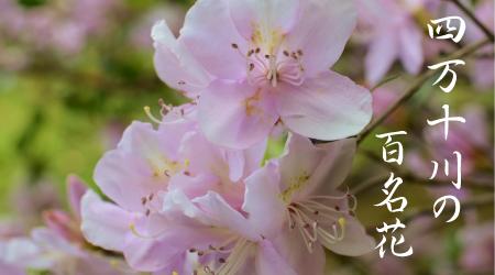 四万十川の百名花